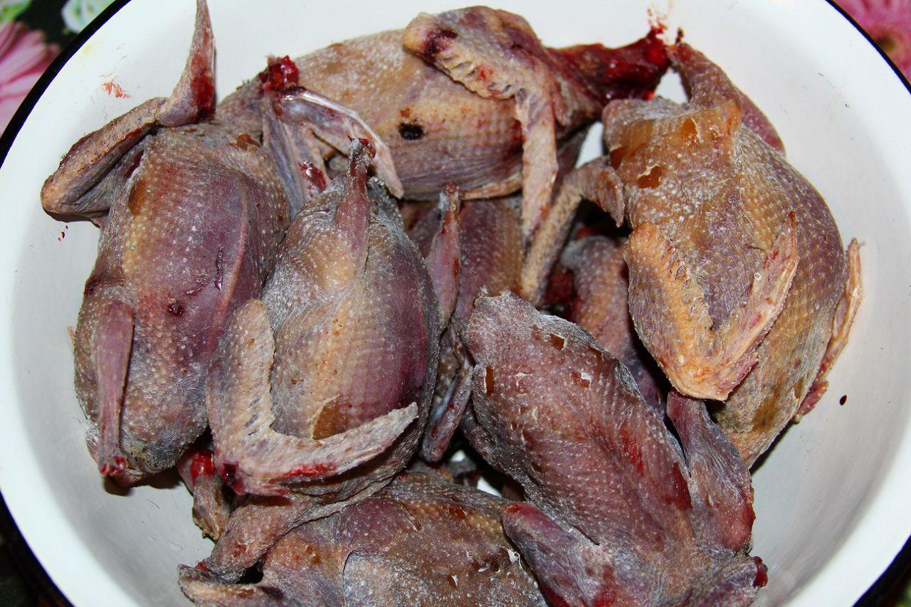 Тушки голубей