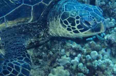 Как линяет красноухая черепаха и из-за чего это происходит?