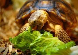 Полноценная еда для черепах: рептомин и другие корма