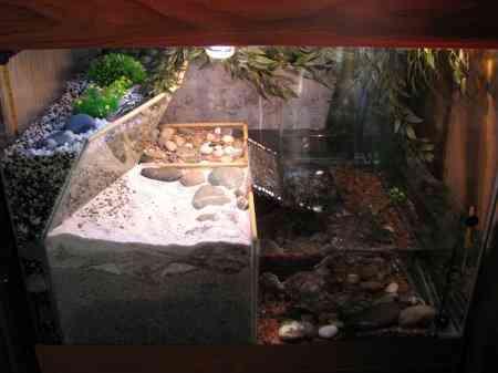 Акватеррариум для красноухой черепахи и других водных видов рептилий
