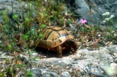 Все о сухопутных черепахах - невероятные моменты жизни