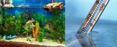 Оптимальная температура в аквариуме для красноухой черепахи