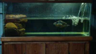 Какая вода подойдет для красноухих черепах