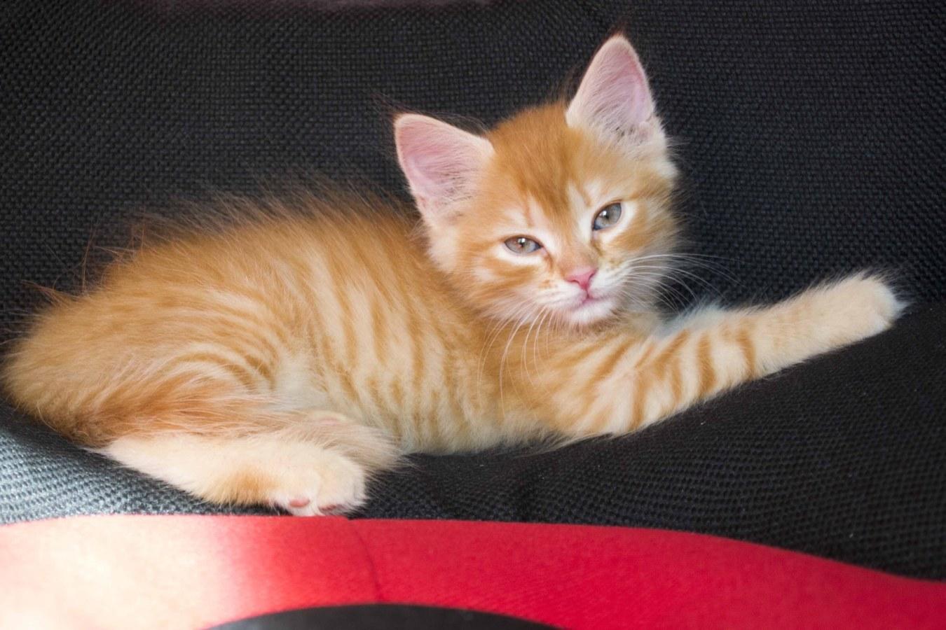 Клички рыжим котят выбирают по характеру малышей