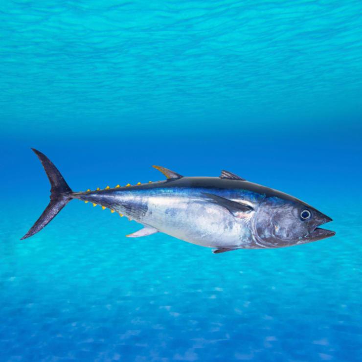 ТОП-10 самых быстрых рыб в мире