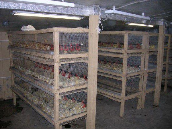 Крышу в клетках для птиц можно сделать из сетки или из фанеры