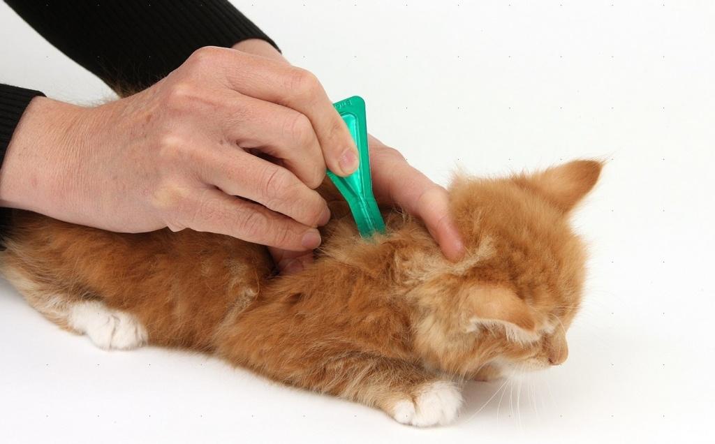 Глистогонные капли на холку для кошек