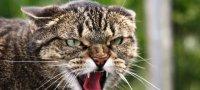 Стоп-стресс для кошек: характеристика и инструкция по применению
