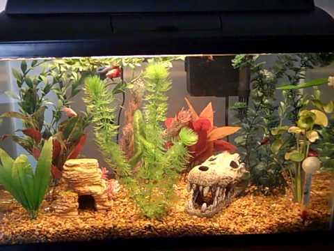 Декор аквариума с черепахами