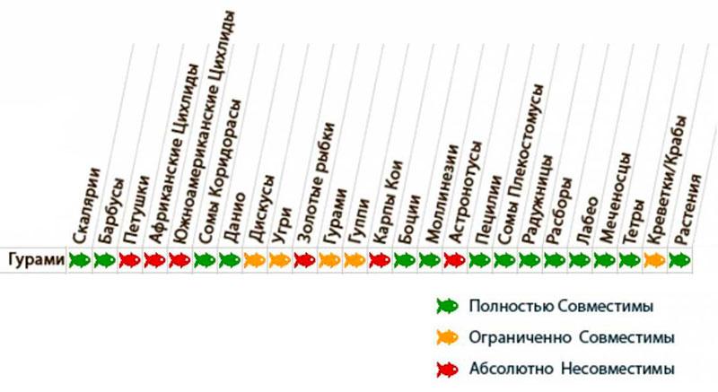 Таблица совместимости гурами