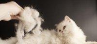 Витамины от выпадения шерсти и для еёулучшения у котов