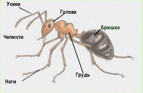 Сколько ног у муравьёв? - Other