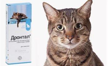Применение дронтала для кошек Лечебный препарат Дронтал для кошек