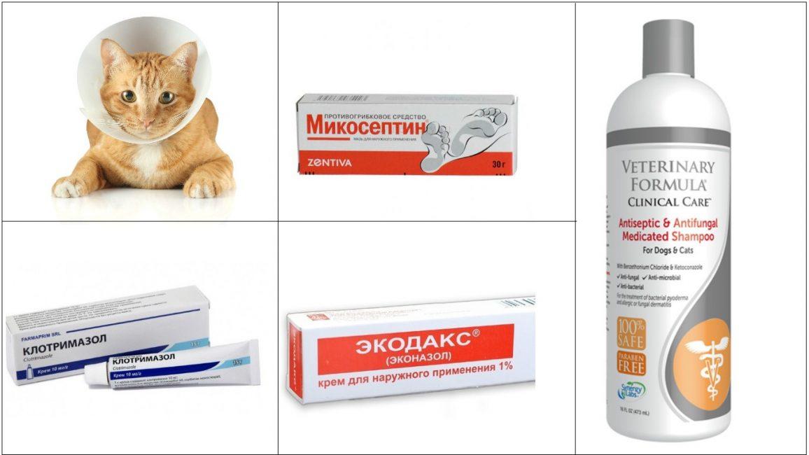 Препараты от грибковых инфекций, которые можно использовать для лечения кошек