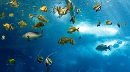 Какая рыба является самой быстрой в мире?