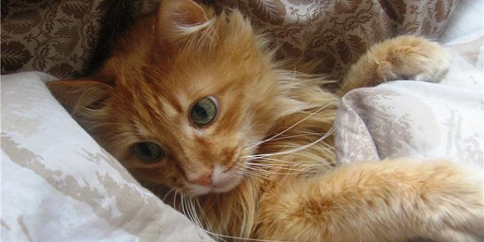 Последствия укуса клеща для кошки