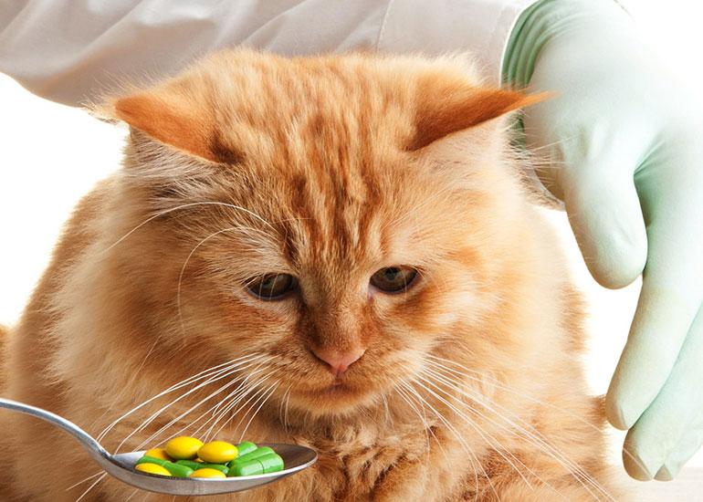 Определение симптомов и лечение ринотрахеита у кошек
