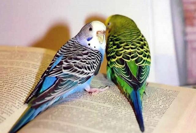 Говорящий попугай- самая умная и разговорчивая порода птиц в мире