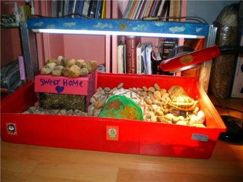 Сухопутные черепахи размещение в доме