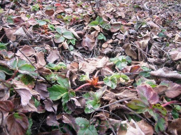 Предозировка удобрения приводит к гибели растений