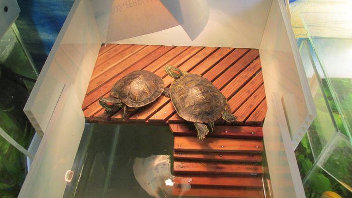 Как своими руками сделать аквариум для черепахи
