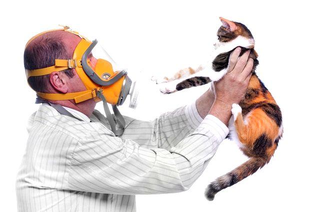 Профилактика аллергии на кошек у взрослых
