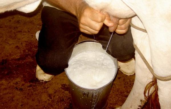 Процесс ручного доения