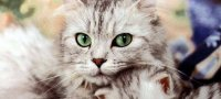 Глазные капли для кошек и котов от слезоточивости, воспаления, инфекционных заболеваний