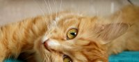 Почему кот или кошка сопит носом при дыхании