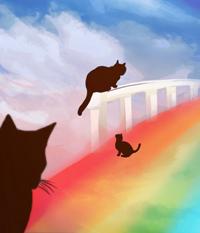 радужный мост для кошек