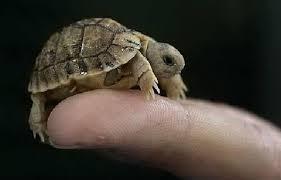 Как питается черепаха