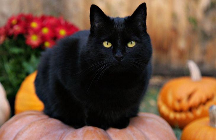 Факты о кошках: интересная биология, знаменитости и легенды