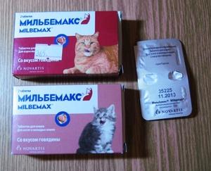 Дегельминтизация кошек должна проводиться на регулярной основе