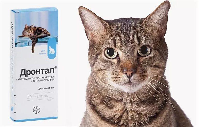 Дронтал для кошек