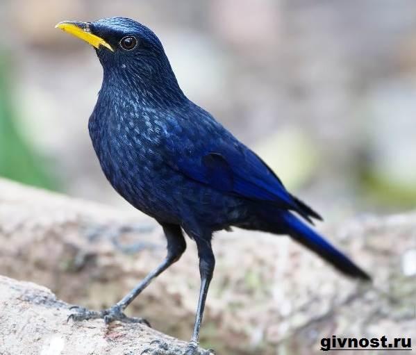 Дрозд-птица-Образ-жизни-и-среда-обитания-дрозда-1