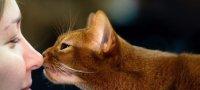 Переводчик с кошачьего языка на русский: как понять кота по звукам и жестам?