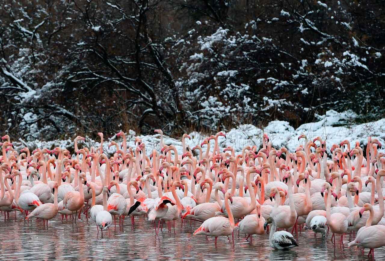 Фламинго обитают в разных условиях