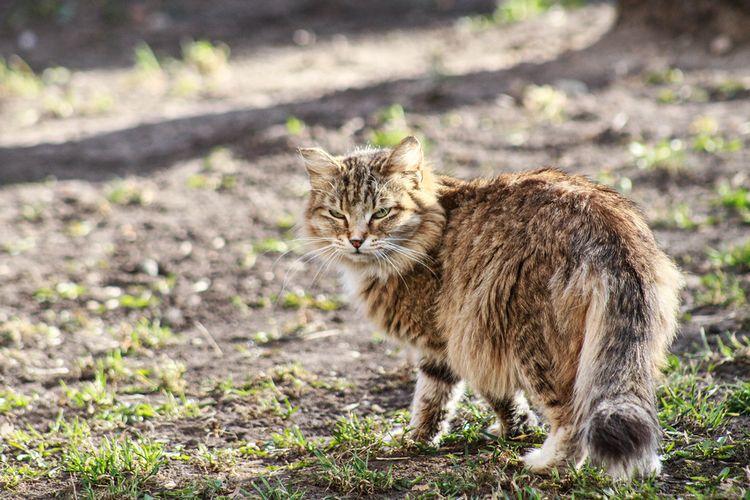 Кот гулякет по улице