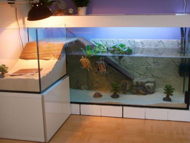 Аквариумы для красноухих черепах