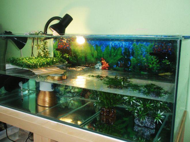 Что нужно красноухой черепахе в аквариум