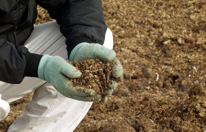 Как использовать куриный помет в качестве удобрения