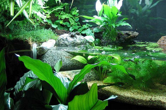 в каком аквариуме держать тритона