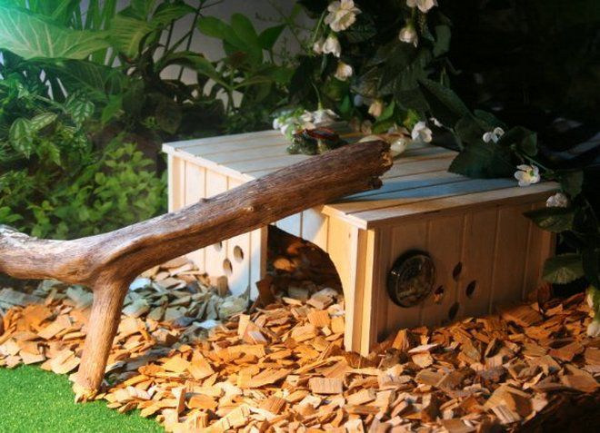 домик для сухопутной черепахи