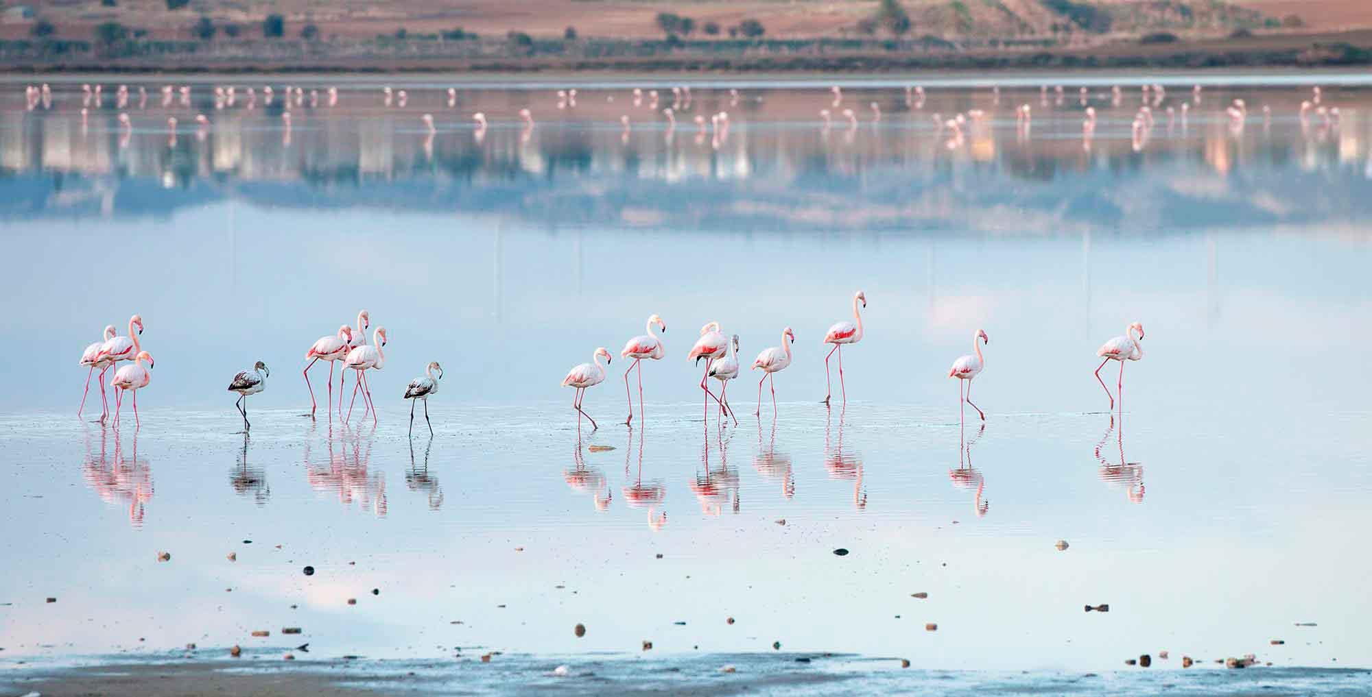 Где живут фламинго