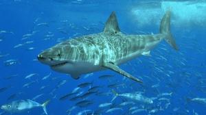 Классификация морских хищниц акул