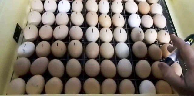 Создание пометок на яйцах