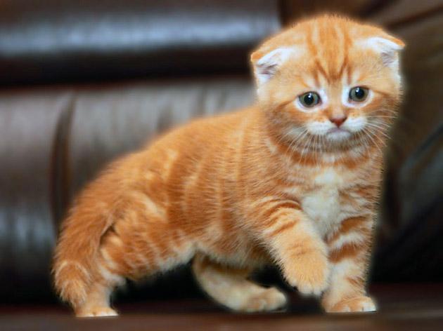 как назвать котенка рижего цвета
