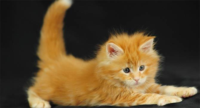 как назвать рижего котенка девочку