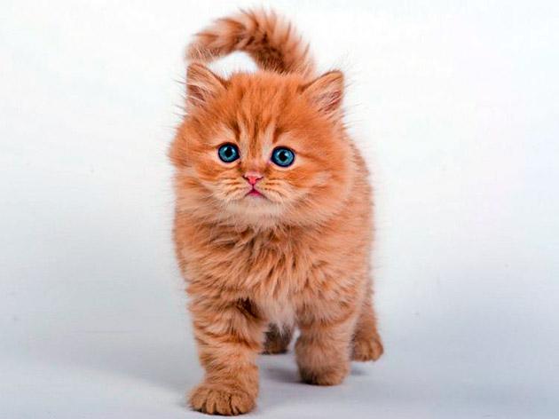 Кличка рыжего котенка не должна быть созвучной с именами домочадцев или хозяином дома