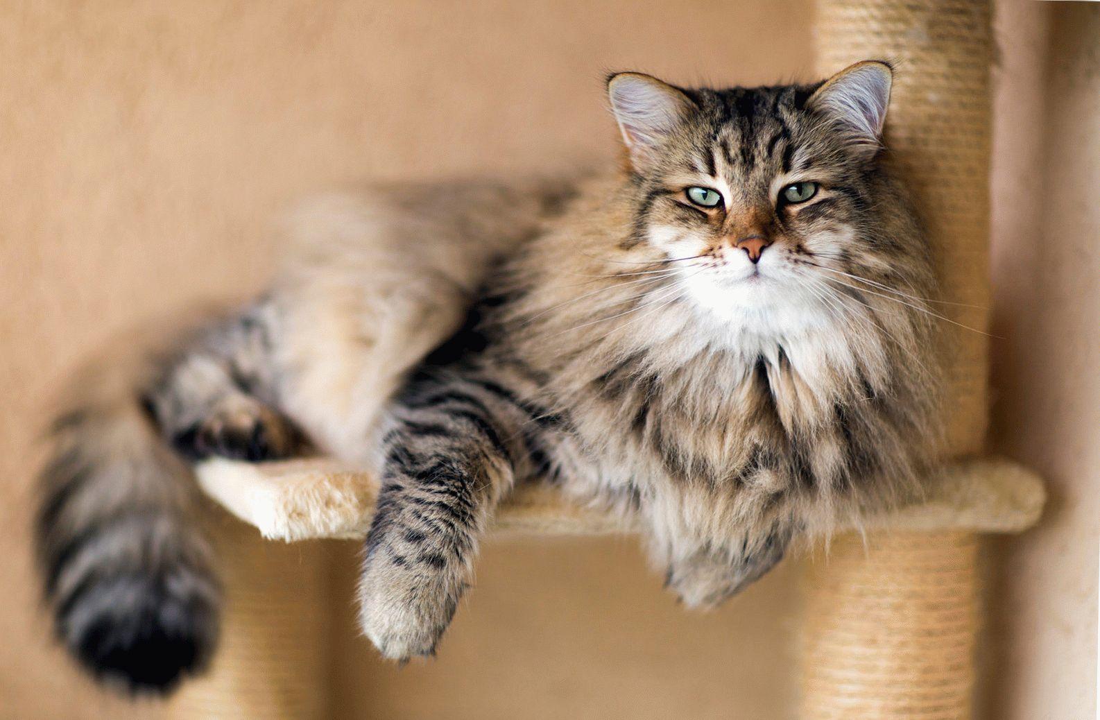 В среднем здоровая кошка живет около 15 лет